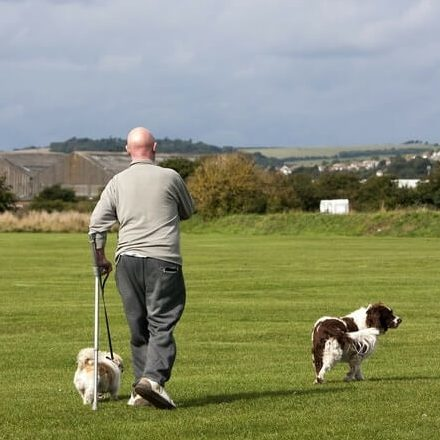 An image of an elderly gentlemen using a crutch and walking the dog in a field.